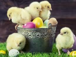 Życzenia Wielkanocne 2019r.
